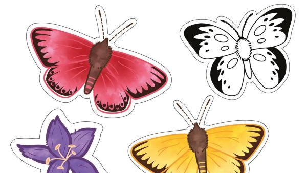 Teaserbild Download Schmetterlinge | Rechte: KiKA